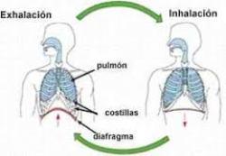 respiracion II