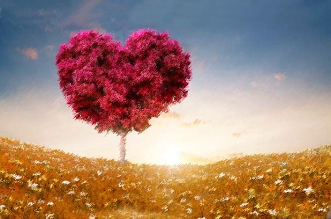 deciciones-del-corazon