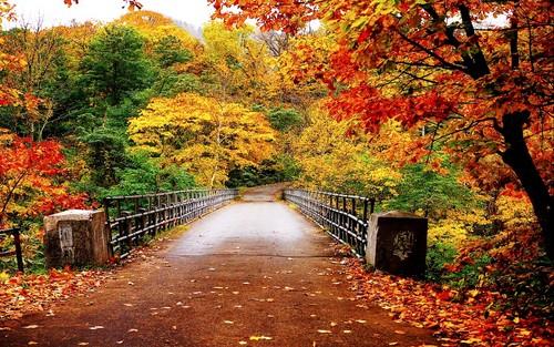 Autumn-Wallpaper-autumn-35867750-500-313